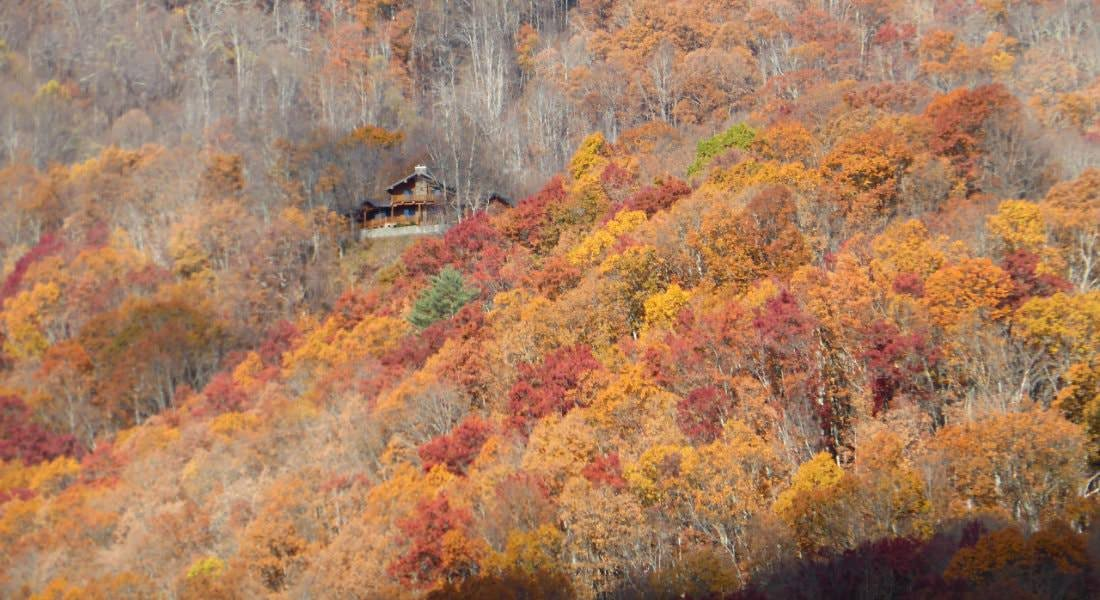Tree-covered mountains in the fall in shades of yellow, burnt orange, and brown