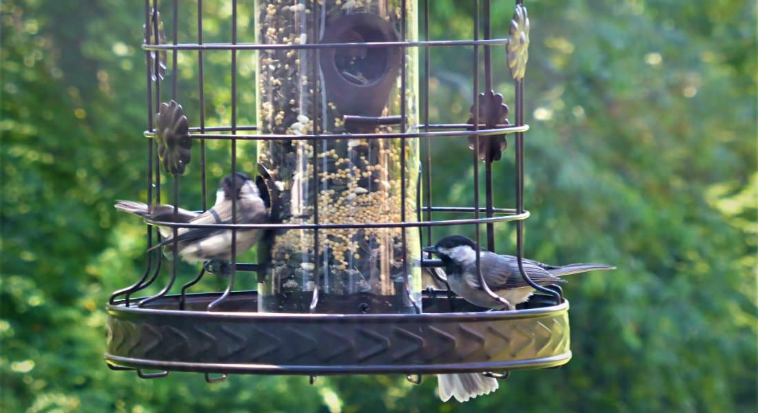 Black metal bird feeder with two birds and green leafy trees in the background