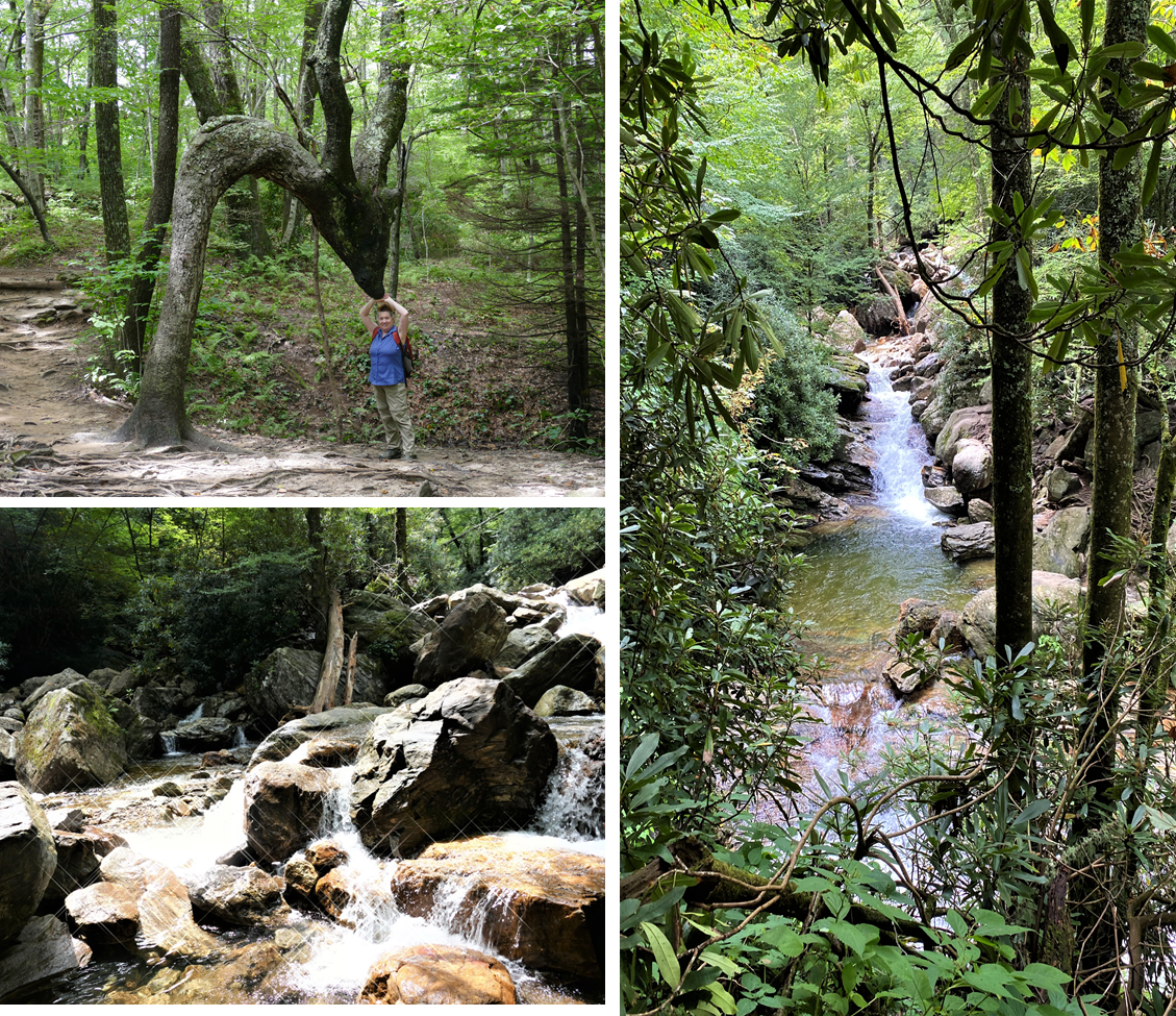 Three Pictures - Andrea standiung under a deer-shaped tree, sparkling stream running over roicks, waterfall shown between trees
