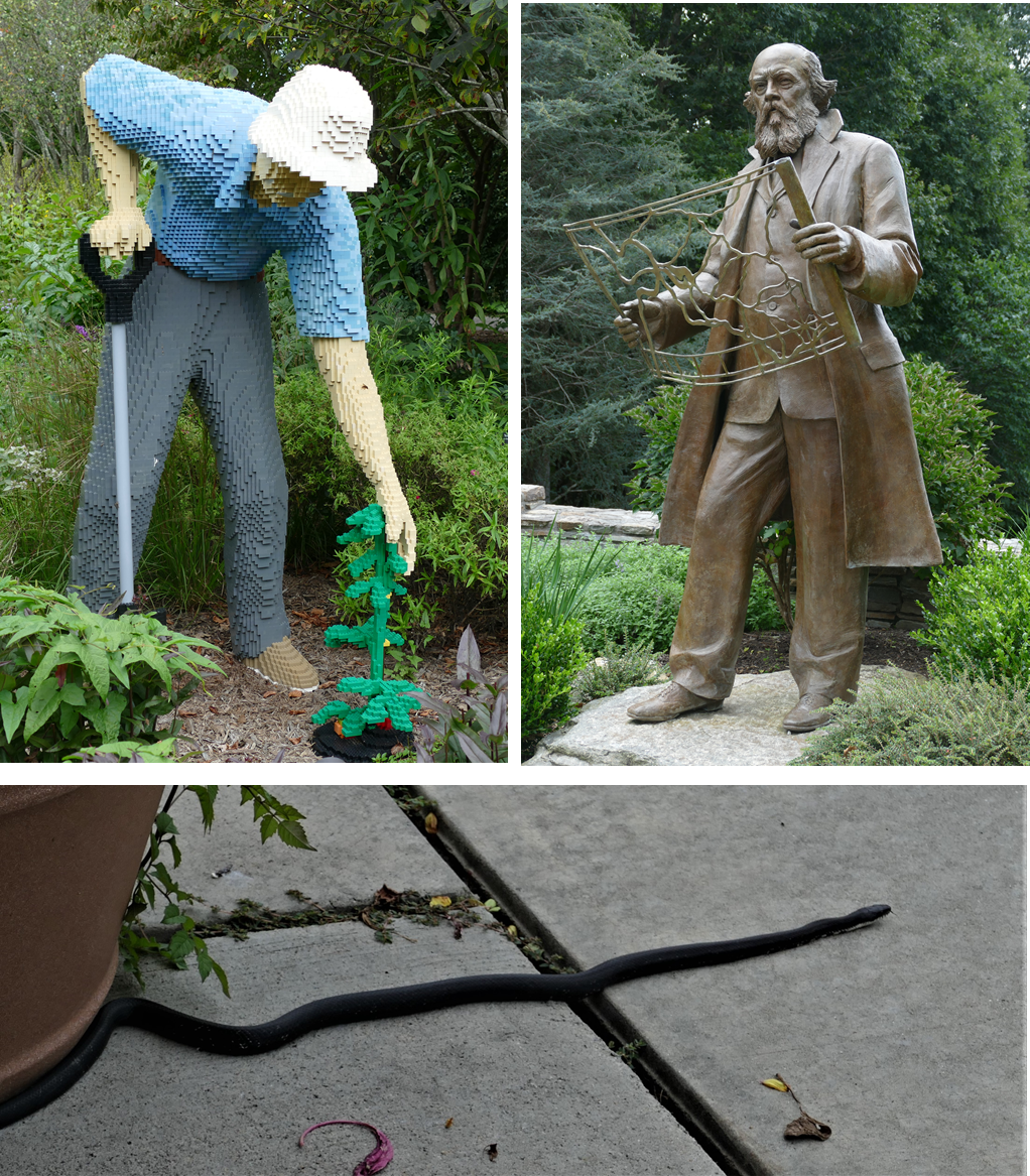 3 pictures, lego sculpture of a bending gardener, Bronze Statue of Fredrick Olmstead, black snake crossing a concrete path