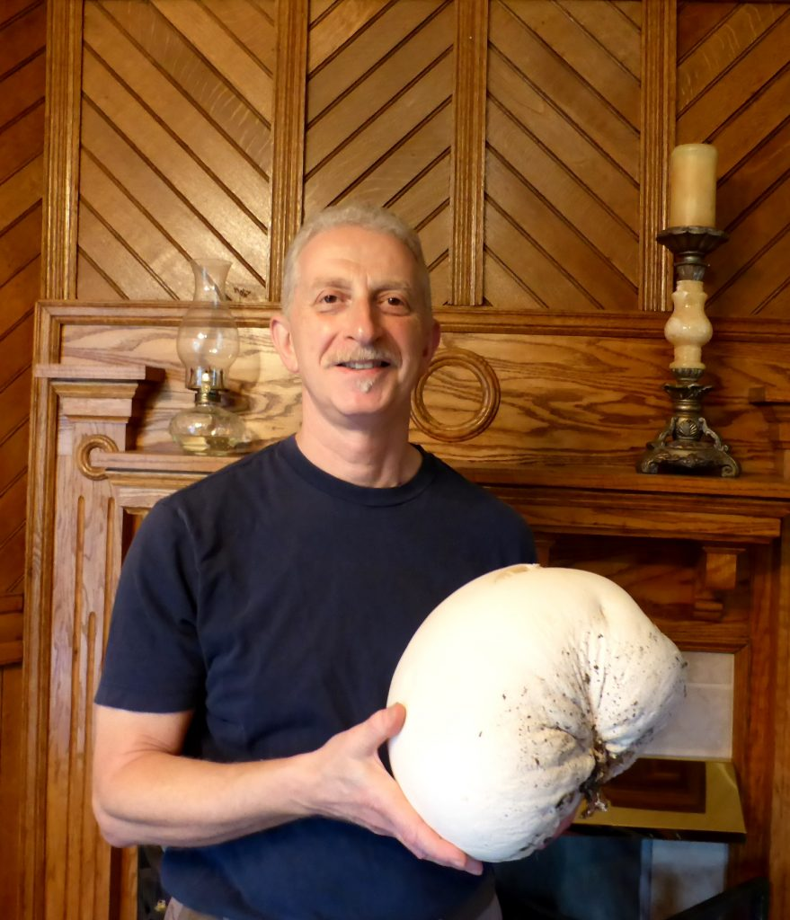 puffball-cropped