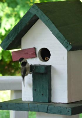 Green and white birdhouse with small bird perched near the entrance hole with a baby bird's beak peaking through