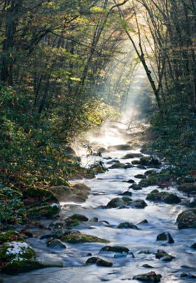 Narrow rocky stream surrounded by green leafed trees with sun beams in the background